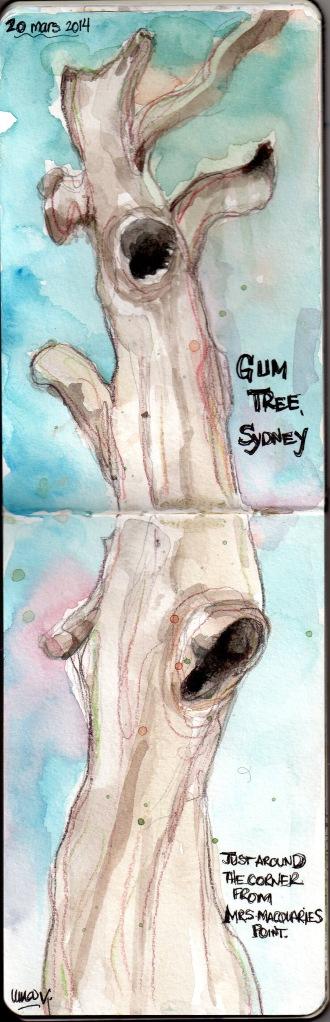 gum tree001