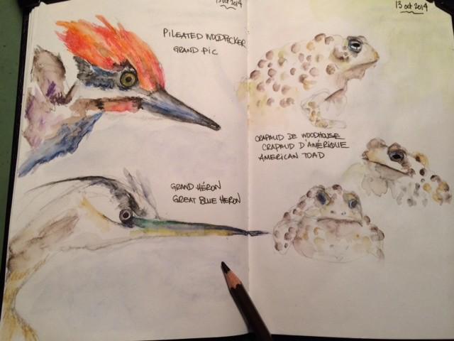 oiseaux_crapauds